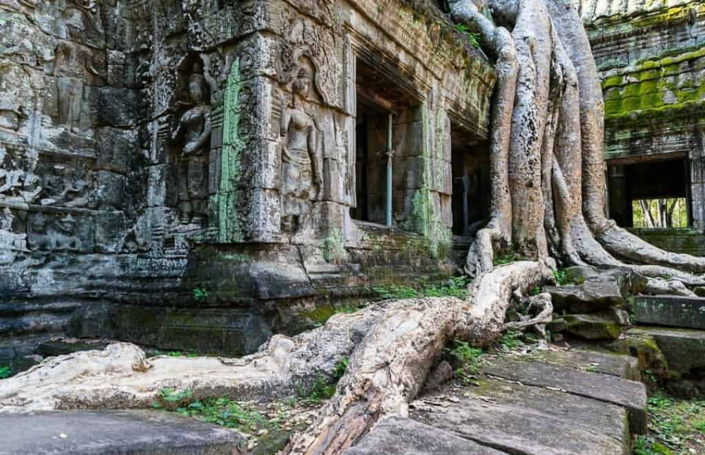 Angkor Wat Tree Roots Angkor Wat Tomb Raider Cambodia Yoga Photo: Angkor Wat Tour Guide 3