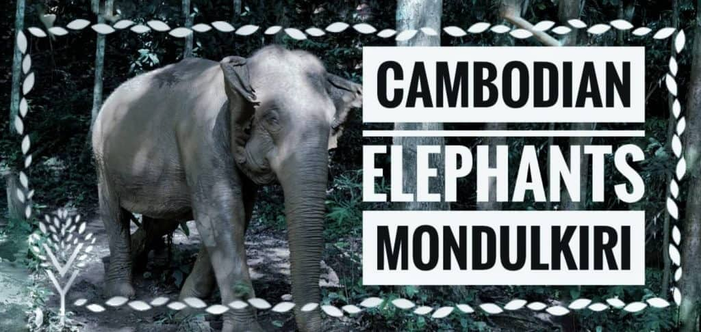 Cambodian Elephants Need Your Help. Don't Let Them Become Extinct! [FREE Mindful Elephant Coloring Book]